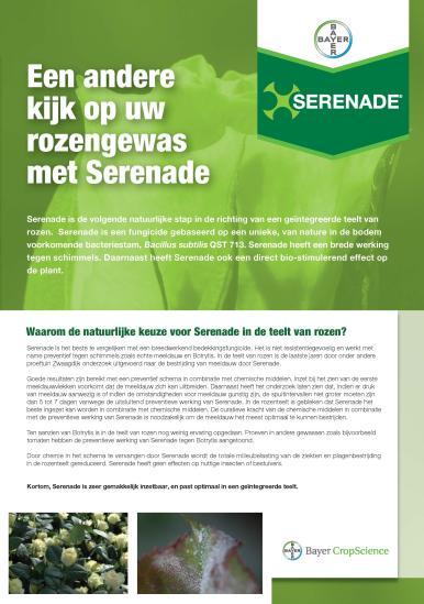 Serenade roos leaflet